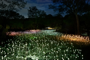"Bruce Munro's ""Light"" exhibition at Cheekwood Botanical Garden and Museum of Art. Photo by Kyle Dreier."